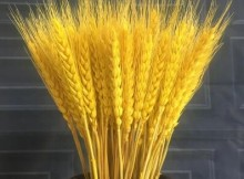 can diabetics eat barley